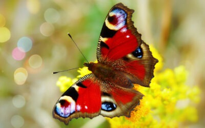 /PODIUM: Data en biodiversiteit